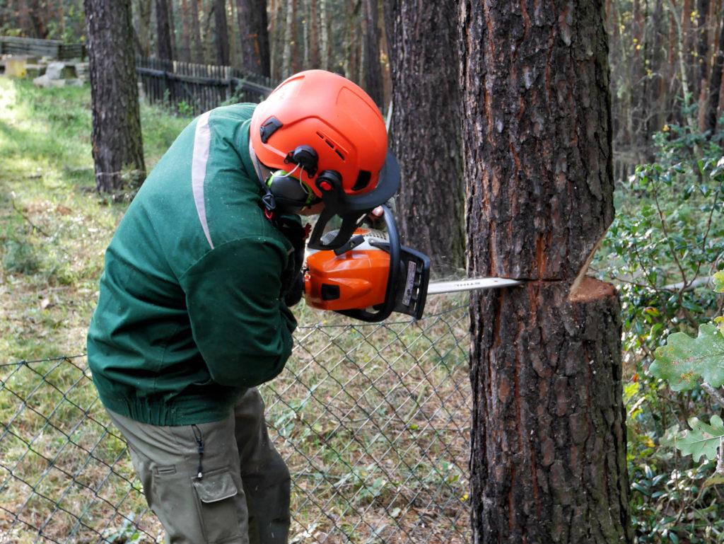Baumfällen-am-Zaun