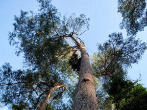 Baumfällen-durch-Abtragung