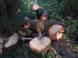 Baumstämme-zersägt