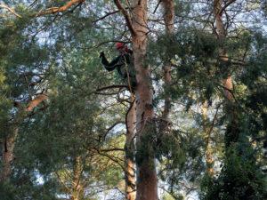 Seilklettertechnik-im-Baum